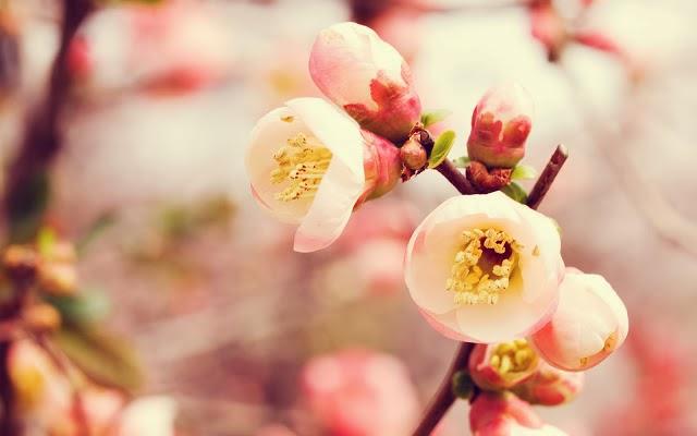 Hình ảnh cây cỏ hoa lá đẹp, anh dep Blog