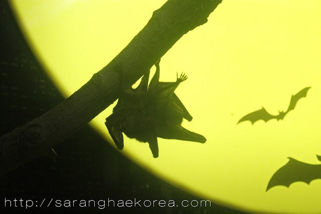 Bats inside the museum