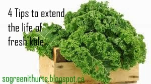 http://sogreenithurts.blogspot.ca/2015/05/4-tips-to-extend-life-of-fresh-kale.html