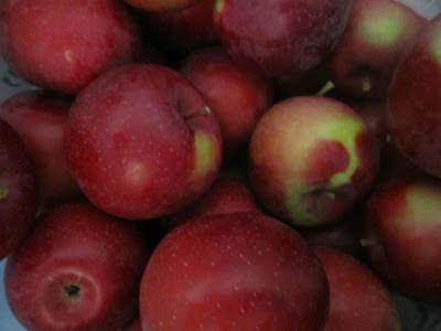 apples, apple picking