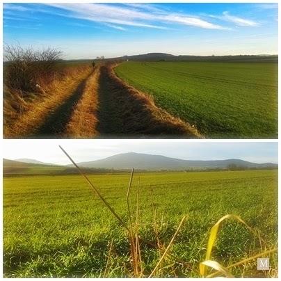 Pola przy Ślęży i wzgórz oleszeńskich