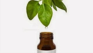 Tea Tree Oil, My Favorite Natural Cure-All