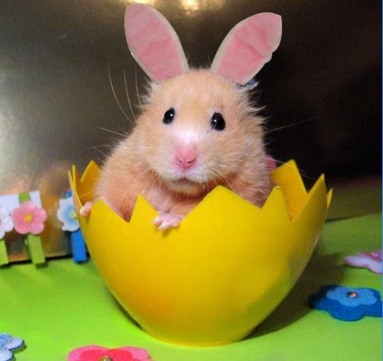 Hamster - bunny