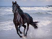 Siyah at sahilde dört nala koşuyor, Siyah At Deniz