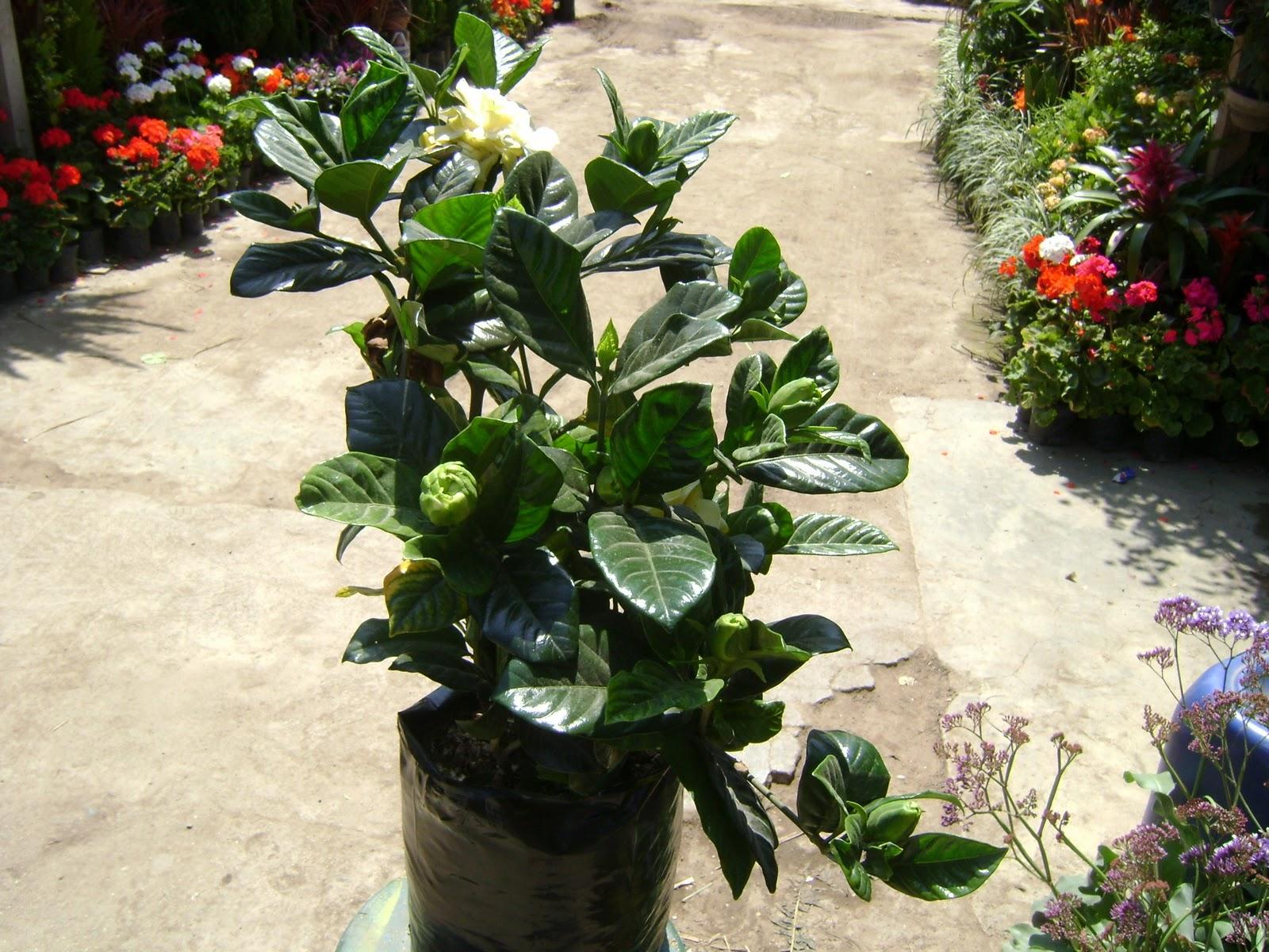 Jardines y macetas fotos de plantas de interior y exterior for Plantas macetas exterior