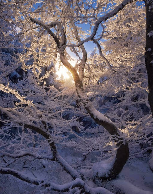 during the cold winter this magical frost covered
