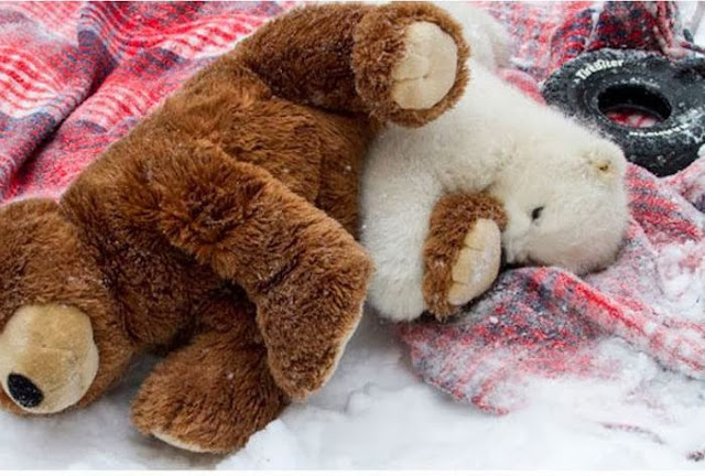 Polar bear vs Teddy bear (7 pics), polar bear cub picture, polar bear cub play with bear toy