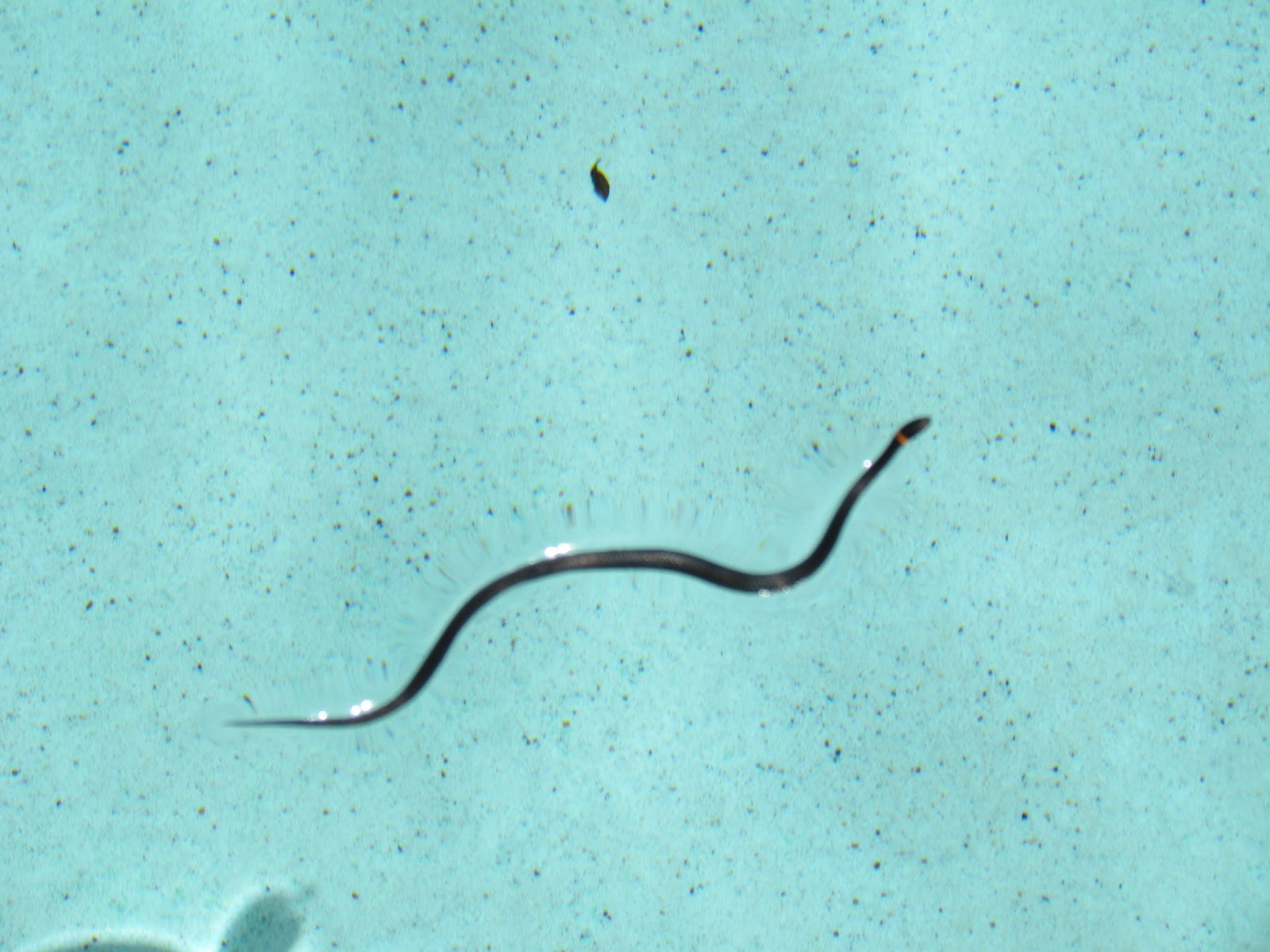 gill and keith world tour snake in the swimming pool