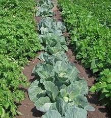 วิธีจัดสวนผัก ปลูกผักสวนครัว Vegetable Garden