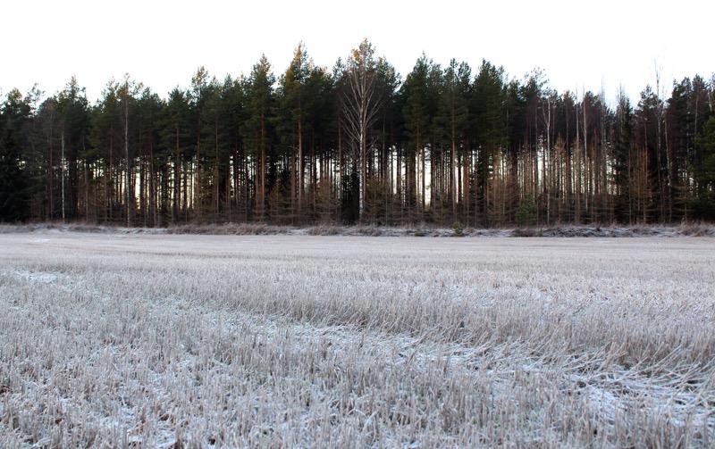 metsämaisemat jurvassa