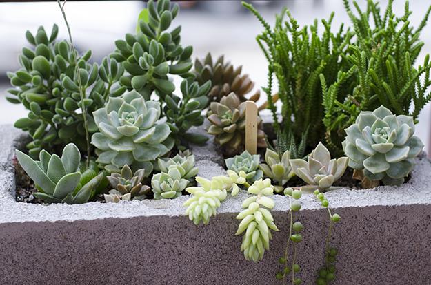 Aprende a realizar macetas con bloques de cemento notas for Bioguia jardines