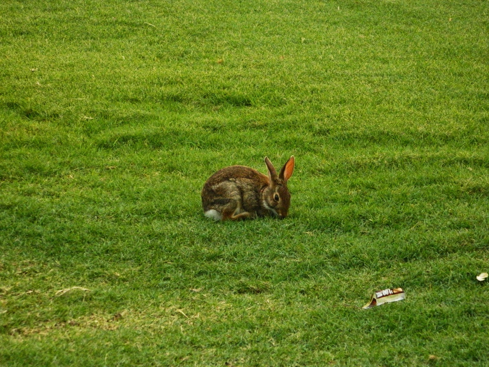 rabbit disney world grass