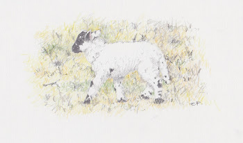 Lost Lamb