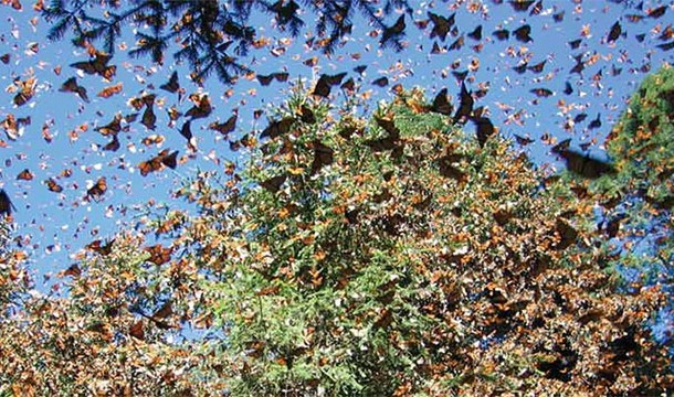 These 20 Unbelievable Pictures Might Look Like An Illusion But They Are Absolutely Real - Monarch Butterfly Migration