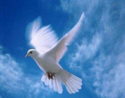 letras de las canciones de k paz de la: