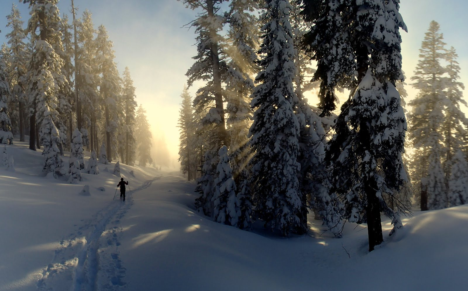 Image result for skiing with dogs hope valley