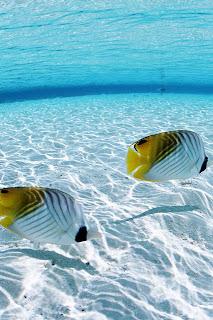 ocean sea fish iphone wallpaper