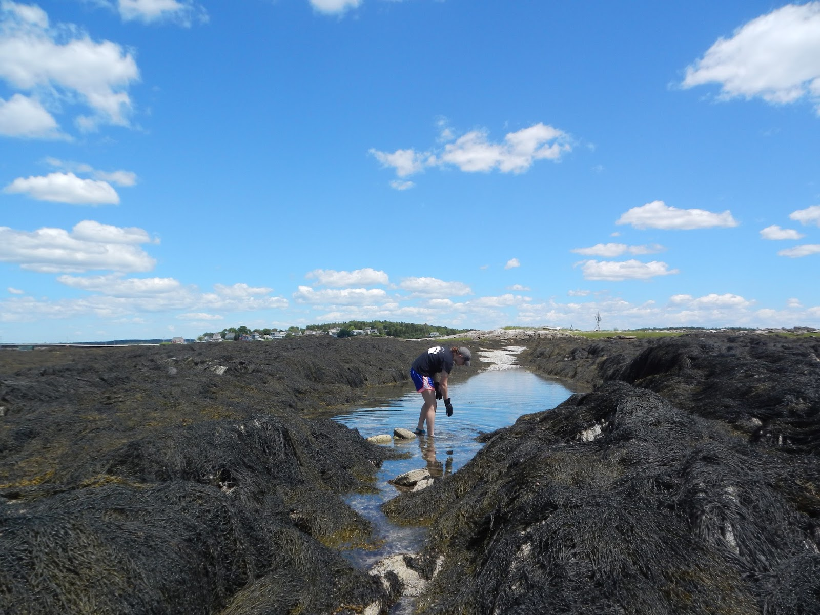 An ocean lover in maine tidepool explorations how to really does it get any better nvjuhfo Gallery