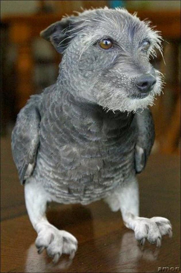 birds-dog-funny-animals-2
