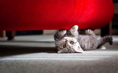 Gatito jugando bajo el sofá - Little kitten playing at bedroom