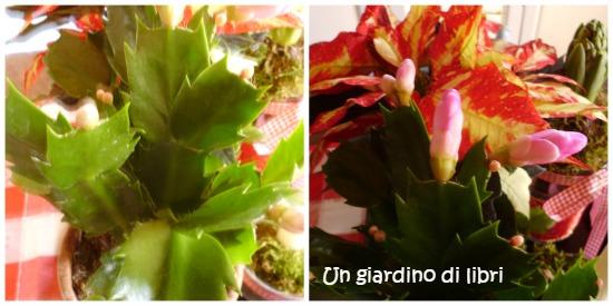 ungiardinodilibri cactus di natale