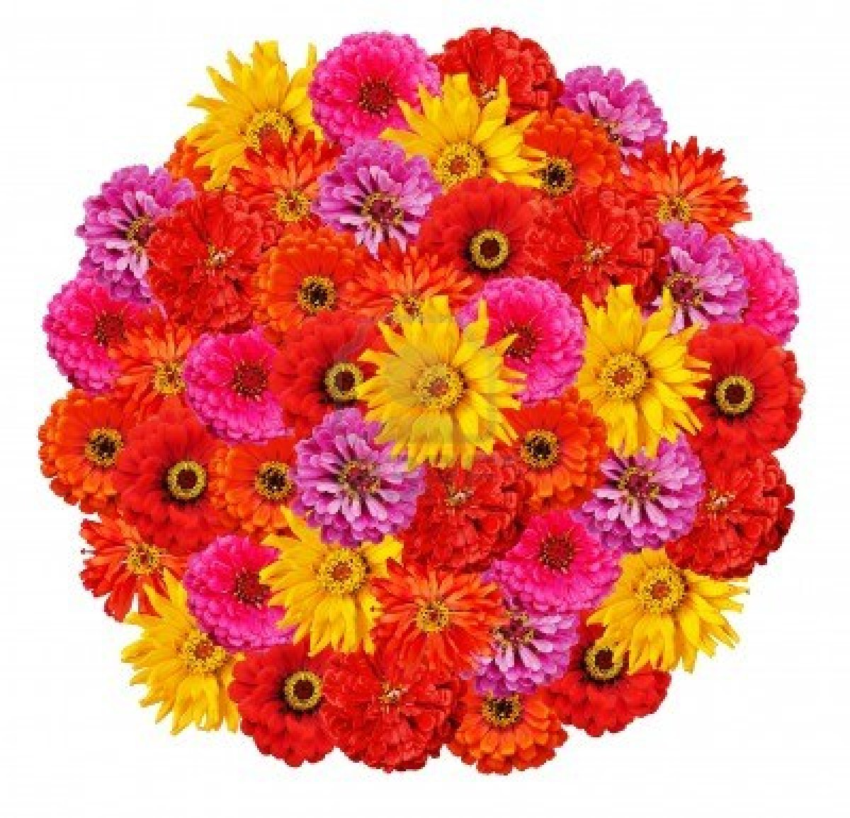 Flowers & Planets Zinnia Flower Bouquet