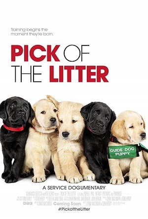Pick of the Litter - Legendado Filmes Torrent Download capa