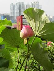 天后宫之特色 - 赏花