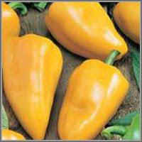 Сладкий перец сорт «Света»