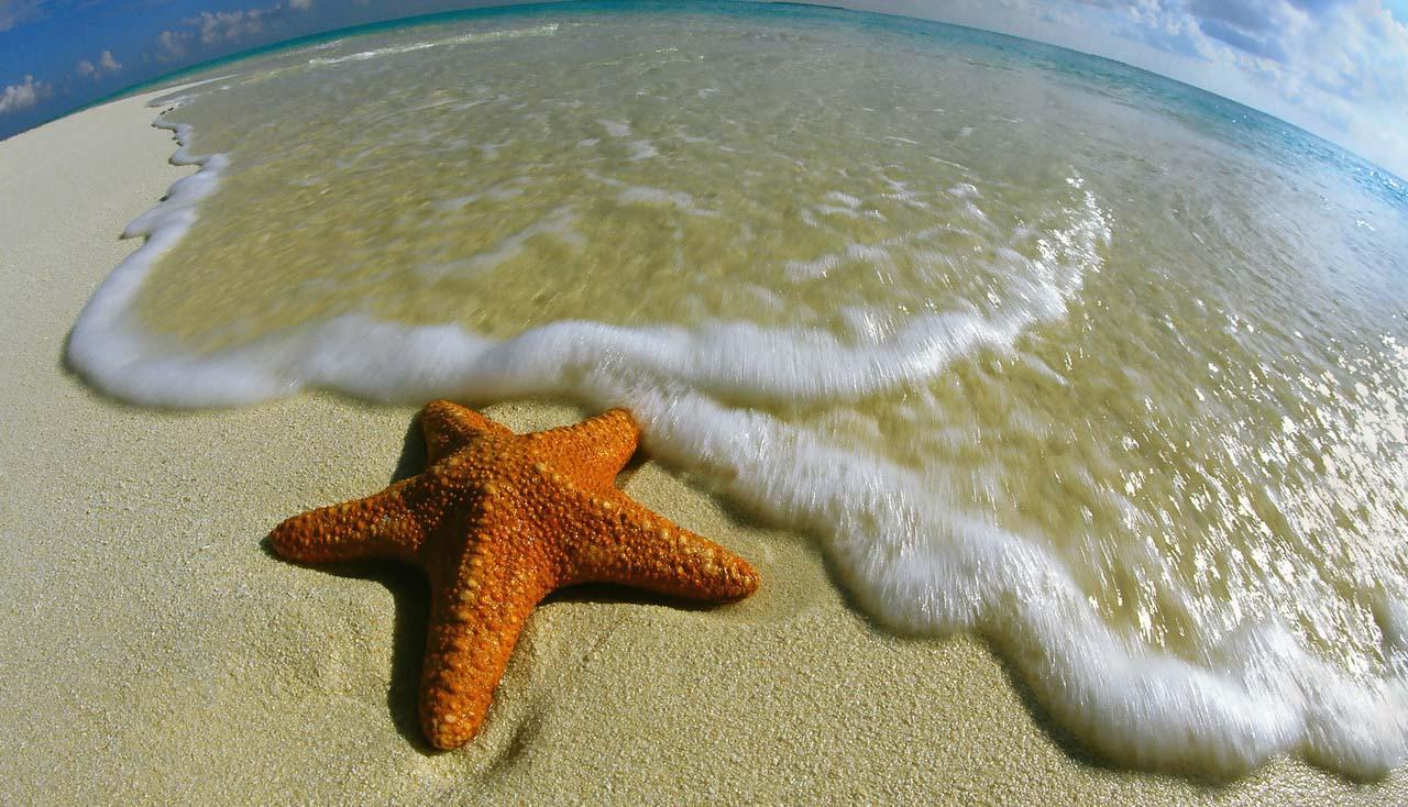 starfish on the beach | Animal Photography