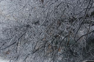 photo of snow covered oak branches