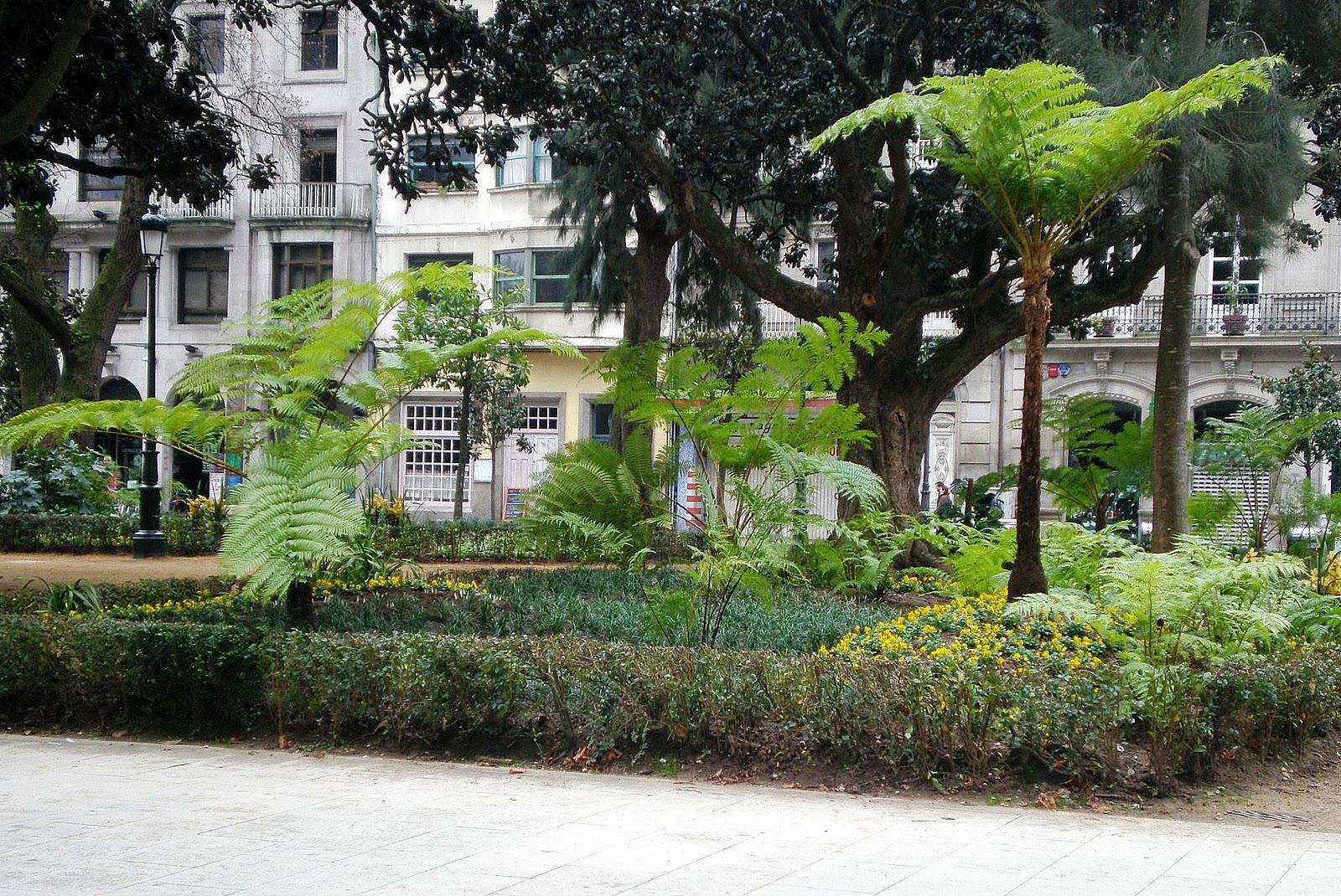 Vivero galiplant ornamental s l cyathea cooperi for Viveros de plantas en vigo