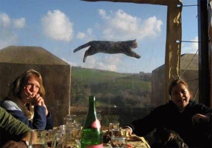 http://1.bp.blogspot.com/-VXZRQLtp_AM/UA2SmXLqgXI/AAAAAAAAAl0/LcwwnkZ7_-c/s1600/binatang+kucing+lucu+3.jpg