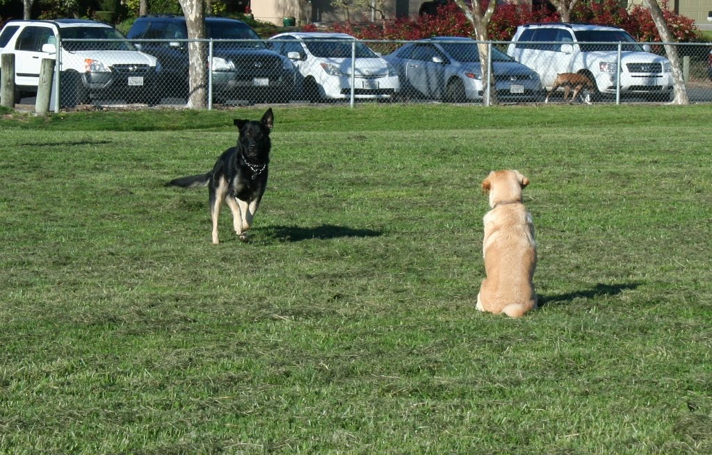 cabana sitting with her back to the camera, at the park near the parking lot, she sees Buster, the german shepherd, running toward her