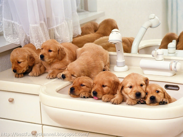 Funny puppies in the bathroom.