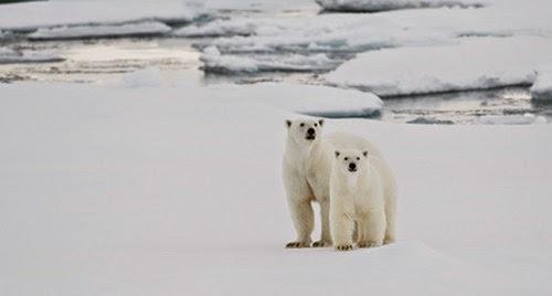 Ayuda a salvar el Artico