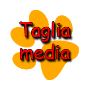 Taglia media