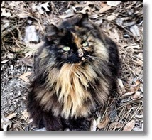 Picture of feral cat