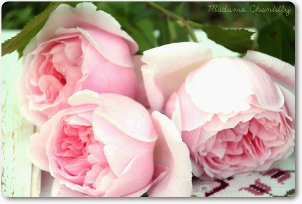 Roses with MVT logo on the label guarantee that the plant is free of known viruses.