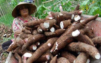 Manfaat Singkong/ubi kayu