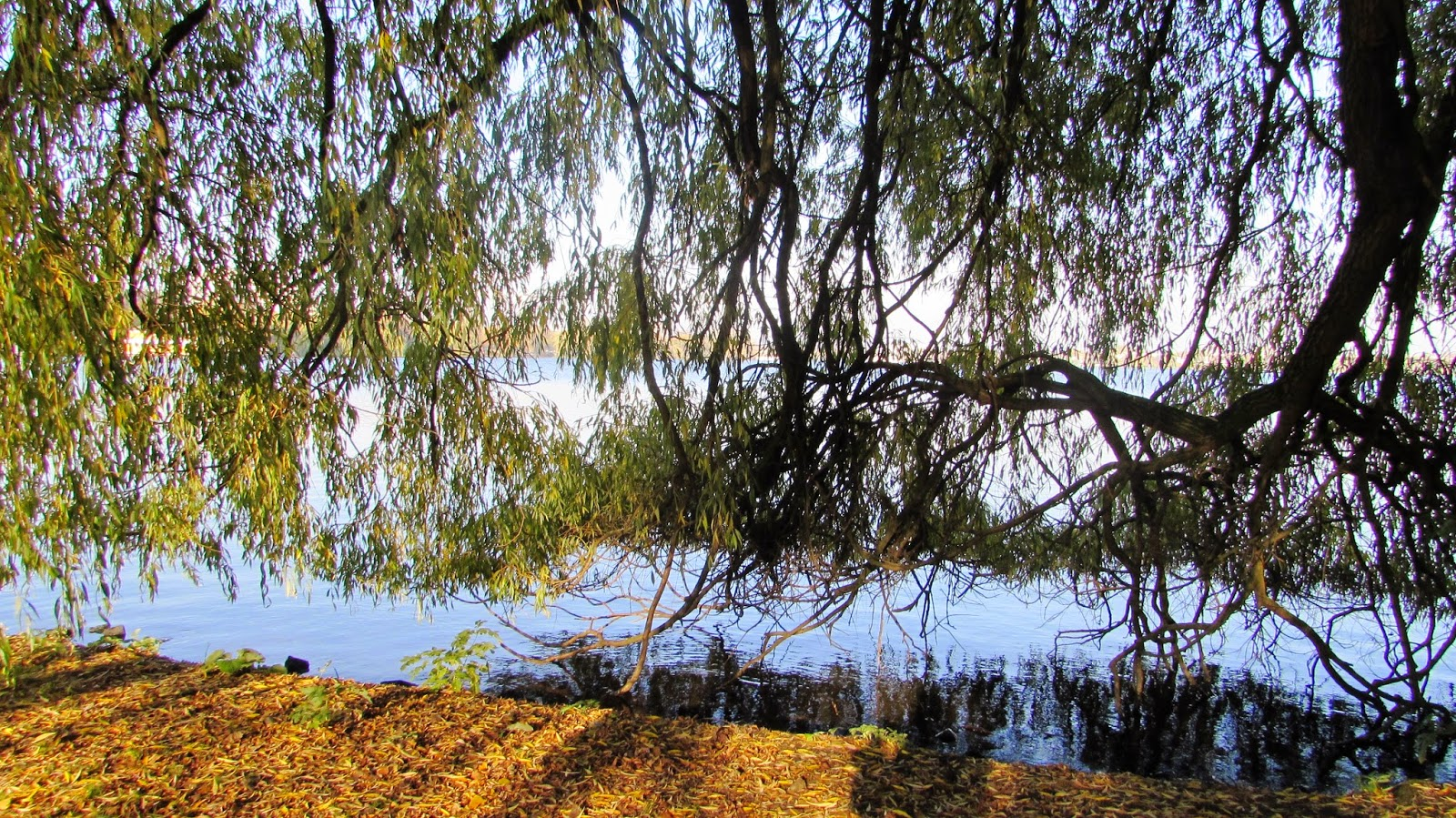 jezioro Hamburg