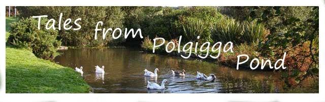 Tales from Polgigga Pond