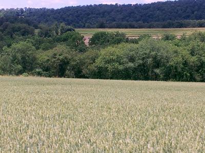 Focus on life: Green: Wheat Fields at Mertz Farms, Keystone Shooting Park, Dalmatia, Pennsylvania :: All Pretty Things