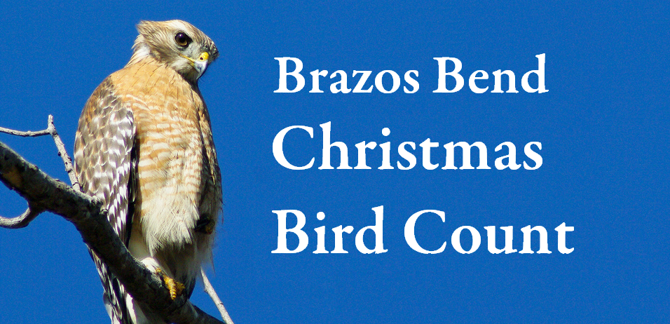 Brazos Bend Christmas Bird Count