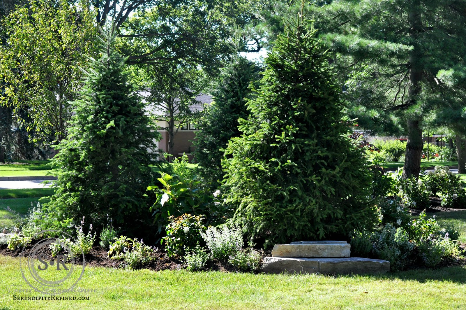 Serendipity refined blog how to landscape a corner lot for The evergreen