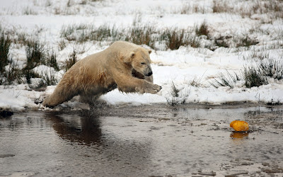 Animals Picture Bear-wallpaper-winter-snow-pictures