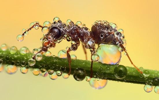 sorprendentes fotografías de insectos magnificados