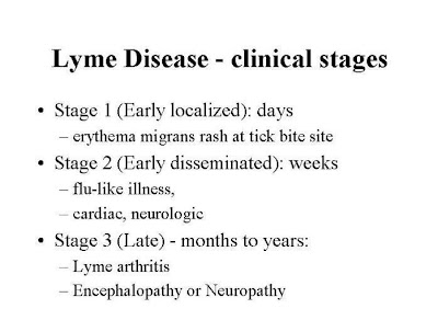 Lyme_Disease_stages