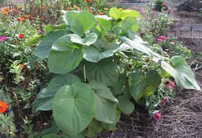 jim long s garden fall garden improvement over summer