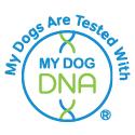 DNA-testaus